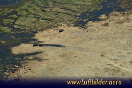 Aerial photo Hippos and Impalas