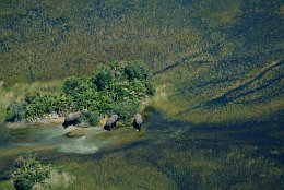 Aerial photo Elephants in the Okavango Delta